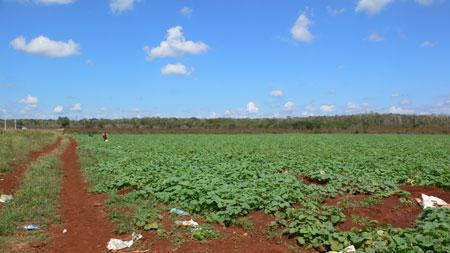 the cucumber farm